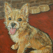 wire-haired-terrier-500