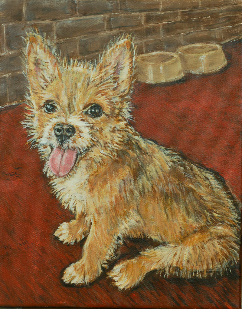 wire-haired-terrier-800